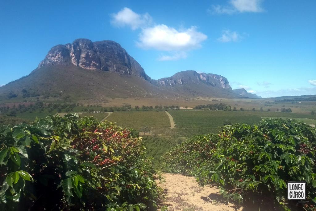 No primeiro plano, um cafezal. Ao fundo, as belas montanhas de Campo Alegre vistas da estrada.