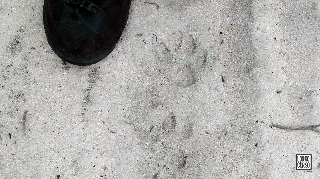 Algumas das pegadas que identificamos no entorno da Matinha