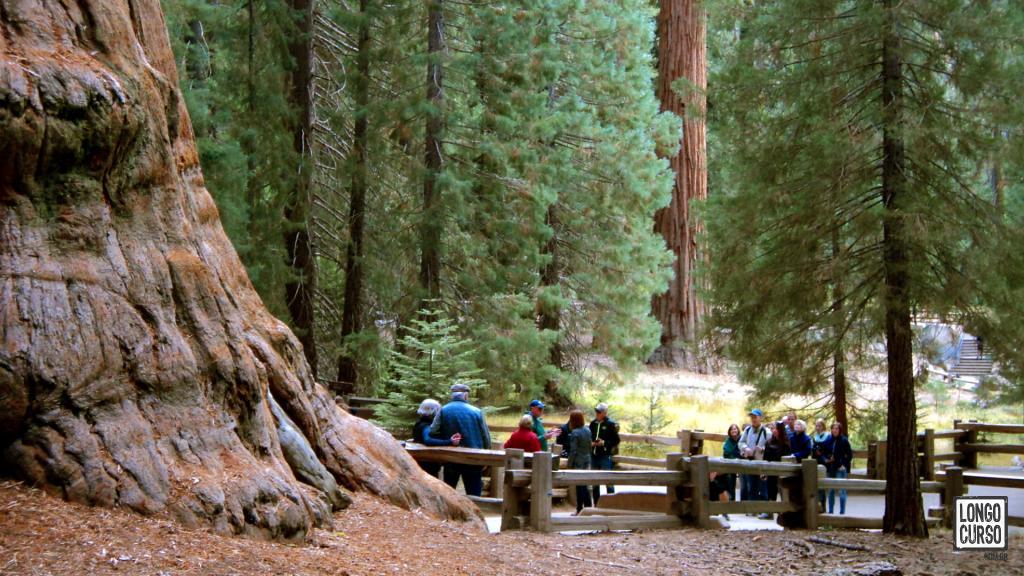 O público fotografa, aos pés da General Sherman Tree