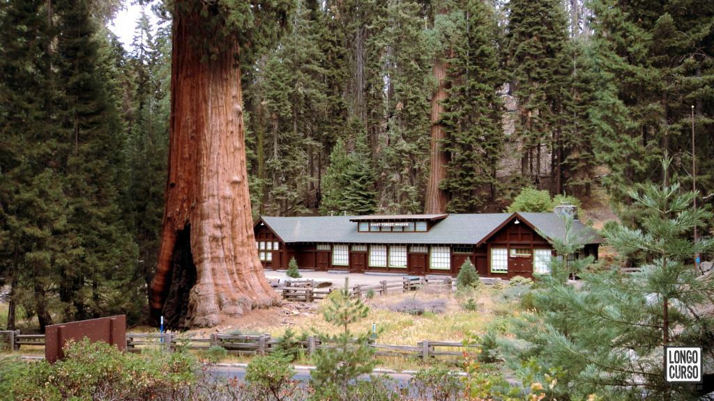 O Giant Forest Museum com uma sequoia no seu jardim