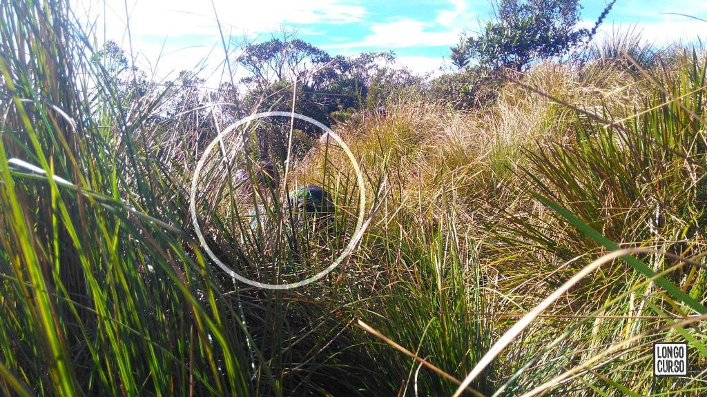 'Trilha' no mato alto após a Pedra Redonda. Em destaque, um dos integrantes da equipe 'submerso' na vegetação.