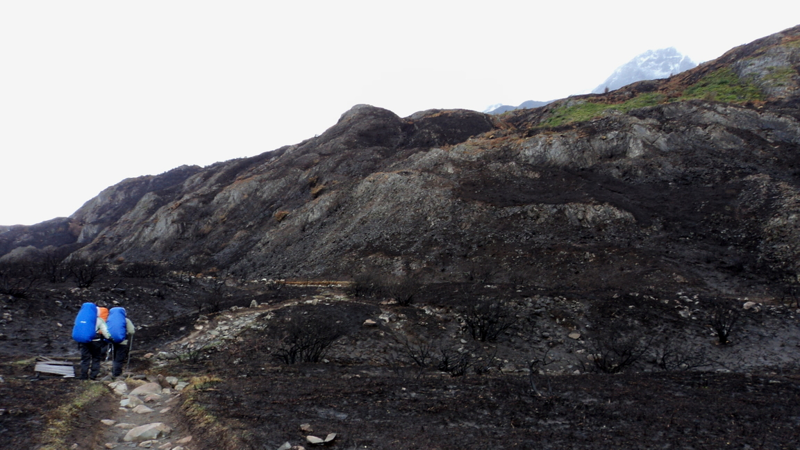 Início da trilha para o Grey, no Paine Grande