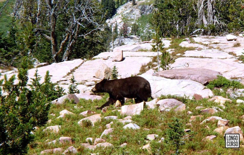 Encontro com urso preto próximo aos Basin Lakes