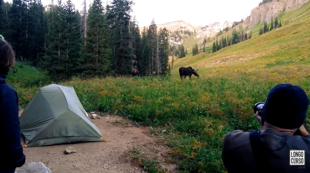 Dois alces se aproximam do nosso acampamento no Granite Canyon