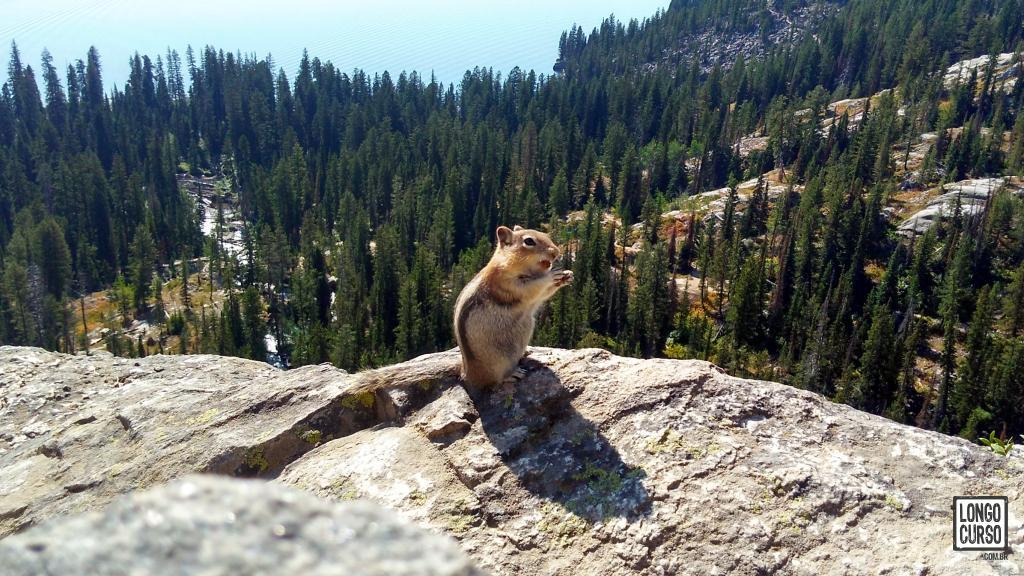 Um esquilo perfeitamente habituado se alimenta em frente ao público no Inspiration Point